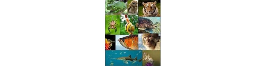 زیست جانوری