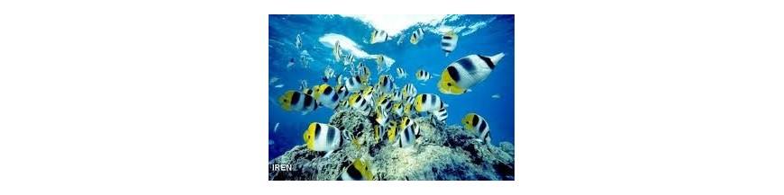 زیست فناوری دریا