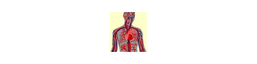 تکنولوژی گردش خون